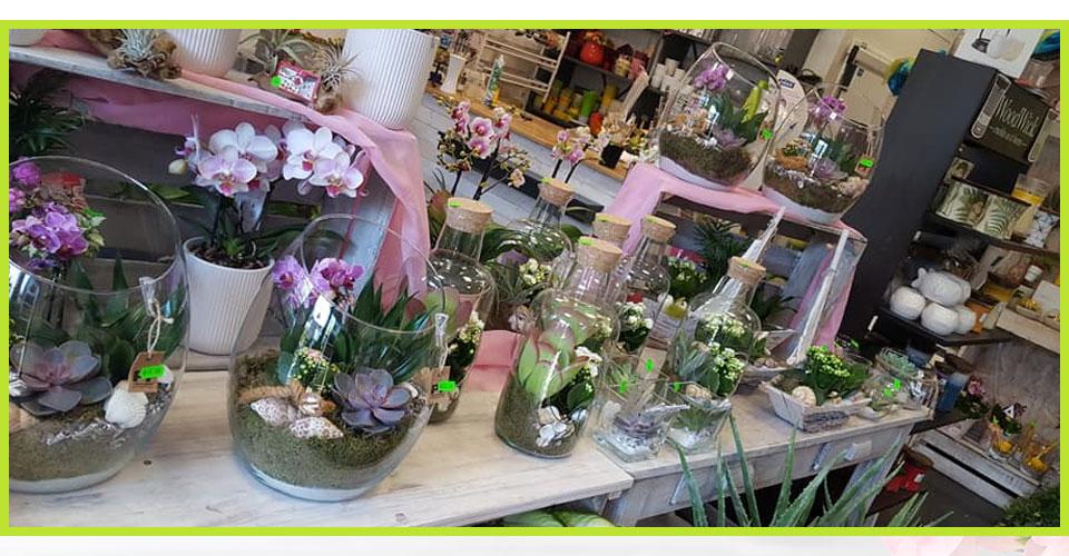 Plantes et fleurs exotiques le val fleuri fleuriste for Fleuriste proche